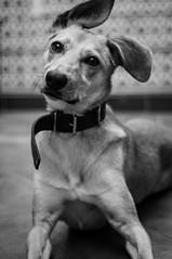 Día Mundial del Perro (gabrielromeroplana) Tags: dia mundial perro dog international day black white bw monochromatic blanco negro sony nex 3n nikon 50mm 18