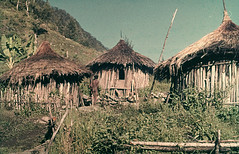 PKN-30-005b (Stichting Papua Erfgoed) Tags: papuaheritagefoundation stichtingpapuaerfgoed papua irianjaya voormalignederlandsnieuwguinea nederlandsnieuwguinea irianbarat anthonyvankampen pace
