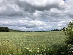 Weizenfelder und dramatische Wolken (hrolapp) Tags: engelsby flensburg weizen felder koppel wolken dramatisch sommer sonne grün grau