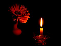 Flower_in_candlelight (ЕгорЖуравлёв) Tags: flower candle