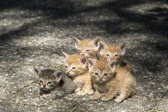 IMG_2018_06_19_04421 (gravalosantonio) Tags: gatos familia animales jaca huesca huerta jactancia