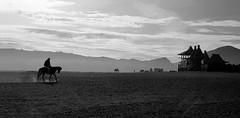 (cherco) Tags: horizon horizonte horse caballo temple templo budismo indonesia lonely negro blackandwhite blancoynegro dust silhouette solitario solitary silueta shadow sombra landscape vulcano volcan sky mountain montaña monochrome cielo light luz alone asia
