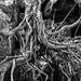 A tangled mess