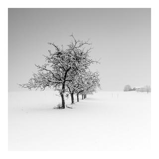 Winter's Day Iii