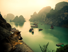 I'm watching you. (juliajjphotography) Tags: halongbay dog early junkboat morning rise sea sun vietnam travel journey mood life love happy trip world horizon people embrace dream moody ambient art artistic live smile traveler dreaming