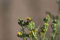 IMG_5513 (d39rober) Tags: wildlife wild flower lakes