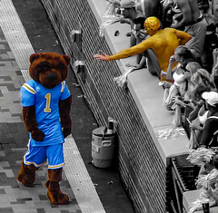 Don't poke the bear (Shawn Blanchard) Tags: joe bruin ucla bruins football american college university tennessee volunteers heisman bear mascot fan sports athletics blue yellow gold neyland stadium