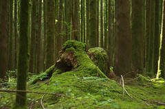 Cogitation (Kristian Francke) Tags: forest nature tree trees landscape outdoors bc canada green landscapephotography photography moss