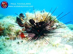 """Kalymnos Diving • <a style=""""font-size:0.8em;"""" href=""""http://www.flickr.com/photos/150652762@N02/43371589451/"""" target=""""_blank"""">View on Flickr</a>"""