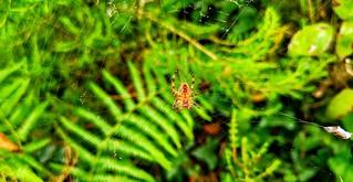 La araña y su presa.