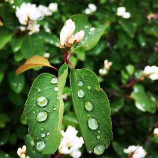 raindrops on ...