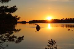 Melonta ilta-auringossa - Canoeing in the evening (iisalmiregion) Tags: kesä summer melonta canoeing lake järvi vesi water ilta evening kesäilta summerevening sunset auringonlasku jyrkkä sonkajärvi meloja melojat wilderness erämaajärvi retkeily