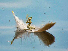 Fairy Boat
