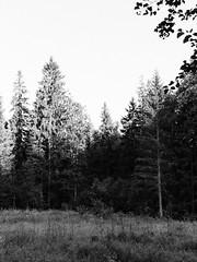 P7051557 (scottcarrphoto1) Tags: olympusomd olympusem5ii olympusem5markii voigtlander25mmf095nokton voigtlander voigtlander25mmnokton voigtlander25mmf095 mastinlabseverydaykodak mastinlabstrix mastinlabs