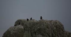 Starlings (Harmony Rising) Tags: stonecircle wiltshire stonehenge englishheritage starlings