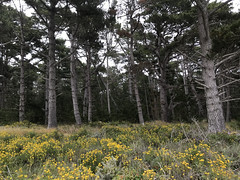 20180618_192234508_iOS (jimward85) Tags: pointlobos carmelbythesea montereybay california