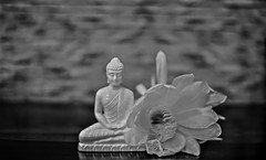 """""""The less you respond to negative people, the more peaceful your life will become."""" (Ramalakshmi Rajan) Tags: statue buddha brahmakamal flower tabletop lighting monochrome blackandwhite blackwhite bw indoor quotes nikond750 nikon 50mm nikkor50mm"""