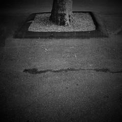 Negative Space: #30 (DrCuervo) Tags: seattlecenter seattle simplybwapp tree blackandwhite urbanphotography streetphotography monochrome iphone negativespace 30days 30
