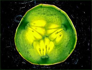 Warped Cucumber