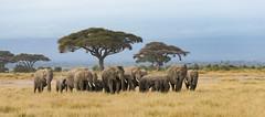 Kenya / África / 2018 (sthefano512) Tags: africa wildafrica savana wild wildlife nature nikon nikond810 nikon70200