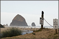 No Beach Access (2bmolar On The Road) Tags: nobeachaccess noparkingeither cannonbeach oregon coast beach water crow haystackrock