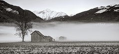 200 years ago in a foggy valley (PeterThoeny) Tags: grüsch gruesch switzerland alps swissalps prättigau graubunden graubünden grisons field grass grassfield fog groundfog tree hut barn mountain winter serene landscape mist day sky clear monochrome blackandwhite sony sonya7 a7 a7ii a7mii alpha7mii ilce7m2 fe2870mmf3556oss 3xp raw photomatix hdr qualityhdr qualityhdrphotography fav200