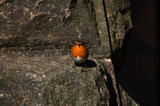Robin's interest