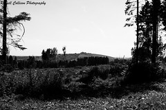 Clearing (russellcollisonphotography) Tags: originalphotography blackwhite blackandwhite landscape nature queenelizabethcountrypark southdownsnationalpark trees quote