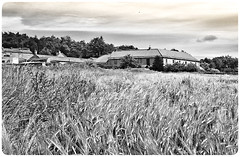 Stainton . (wayman2011) Tags: colinhart wayman2011 bwlandscapes mono rural fields cornfields farms huawei mobile phone pennines dales teesdale stainton countydurham uk