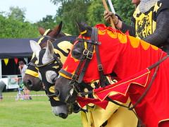 DSCF3899 (SierPinskiA) Tags: ruffordabbeycountrypark rufford knightsofnottingham fujixs1 jousting medieval horse knights goldeneagle falcon