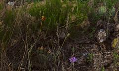 Flora, Upper Canyon Trail, Caprock Canyons State Park, Texas (Rick Knepper) Tags: fujifilmgfx50s gf23mmf4rlmwr