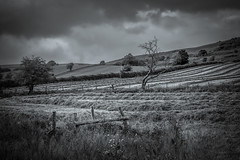 Roaches Farmland (Alan E Taylor) Tags: agriculture atmospheric bw blackwhite blackandwhite countryside dark dramatic england europe farm farming field fineart landscape leek lightroom mono monochrome nature noiretblanc peakdistrict roaches rural seleniumtone skylum skylumtonalityck staffordshire tourism tourist travel tree uk unitedkingdom britain british picturesque scenic