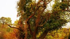 sunny afternoon (j.p.yef) Tags: peterfey jpyef yef seasons summer afternoon park tree sunshine germany photomanipulation texture hamburg