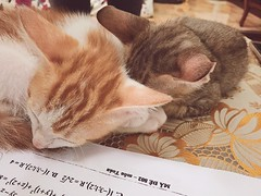 Let's ruin our parent's homework,shall we ? (cachimzasauzieng56) Tags: cats kittens brother sleep bedtime cute adorable chubby