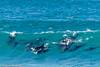 Dolphin, Crowdy Bay NP, Australia (Manuel ROMARIS) Tags: australia crowdybaynationalpark dolphin laurieton queensland newsouthwales au
