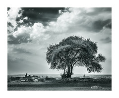 Tree in Krakow (pawelrkrk) Tags: cityscape landscape blackandwhite monument sky clouds trees