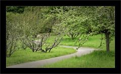 S (Jean-Louis DUMAS) Tags: nature paysage landscape landscapes dreams vert green arbre tree ciel sky cloud nuage pelouse champ forêt animal personnes sur la photo