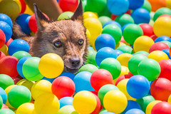 Fetch the coloured ball! (Steve M Photography) Tags: dog canine fun colour activity exercise animal pet