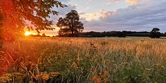 Welbeck Sunset (Stephen Ostler) Tags: mansfield nottinghamshire sunset