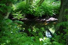DSC01097 (g.lebloas) Tags: forêt bois arbre eau