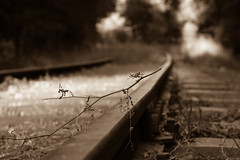Les rails oubliés (Nadia (no awards please !)) Tags: marcenais rail railway sepia ligne bokeh