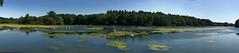 Swan Lake Panorama (Simon Caunt) Tags: clumber clumberpark nationaltrust nottinghamshire sun sunny blue bluesky mrbluesky azure summer panoramic panorama wideformat