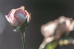 Good Morning Light (NathalieSt) Tags: europe france hautsdefrance nikon nikond750 nikonpassion nikonphotography noyon oise picardie
