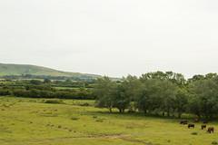 Arlington Reservoir_24 (Natalie Banton) Tags: 2018 35mmlens june arlingtonreservoir countryside cows farmland landscapes nikon rollinghills