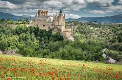 Alcázar of Segovia: a spring view (Ignacio Ferre) Tags: nikon españa spain comunidaddecastillayleón segovia alcázardesegovia alcázar castillo castle torre tower campo field heritage patrimonio paisaje landscape amapola poppy naturaleza nature