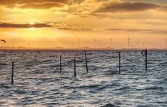Sunset Wieringermeer (Daan Doezie) Tags: sunset andijk wieringermeer ijsselmeer sunrise water zee windmolen windmills birds