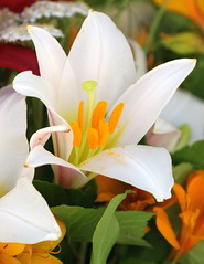 Cut Flowers At The Market (Paul den Ouden) Tags: flowers floral flora farmersmarket powellriver p