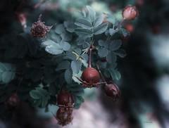 Beautiful nature ... (Julie Greg) Tags: nature flowers colours flower fujifilmxt20 fujifilm leaf light leaves details
