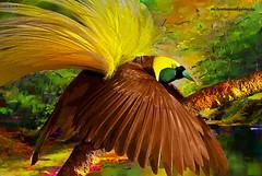 BIRD OF PARADISE. (Viktor Manuel 990.) Tags: birdofparadise avedelparaiso forest bosque trees arboles digitalpainting pinturadigital brightcolors coloresbrillantes querétaro méxico victormanuelgómezg water agua