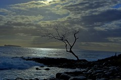 Lone Tree (Kirt Edblom) Tags: maui mauihawaii hawaii tree scenic pacific pacificocean silhouette water wife waves waterscape serene seascape 2018 june blue bluesky gaylene milf clouds kirt kirtedblom edblom easyhdr hdr nikon nikond7100 nikkor18140mmf3556 sunlight landscape
